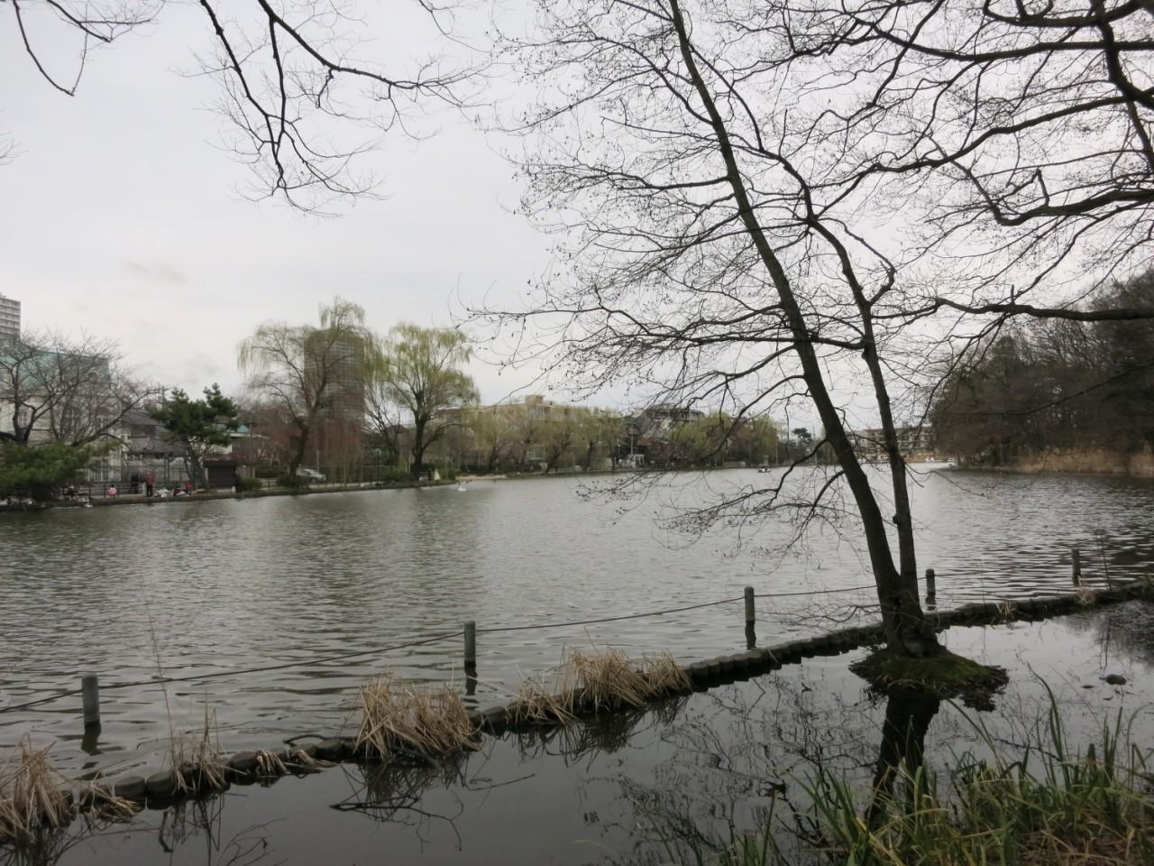 もう直ぐ春ですねぇ@石神井公園